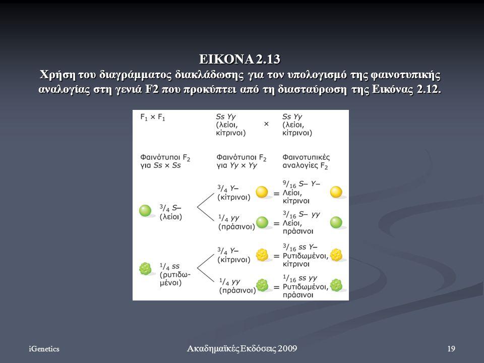 iGenetics 19 Ακαδημαϊκές Εκδόσεις 2009 ΕΙΚΟΝΑ 2.13 Χρήση του διαγράμματος διακλάδωσης για τον υπολογισμό της φαινοτυπικής αναλογίας στη γενιά F2 που π