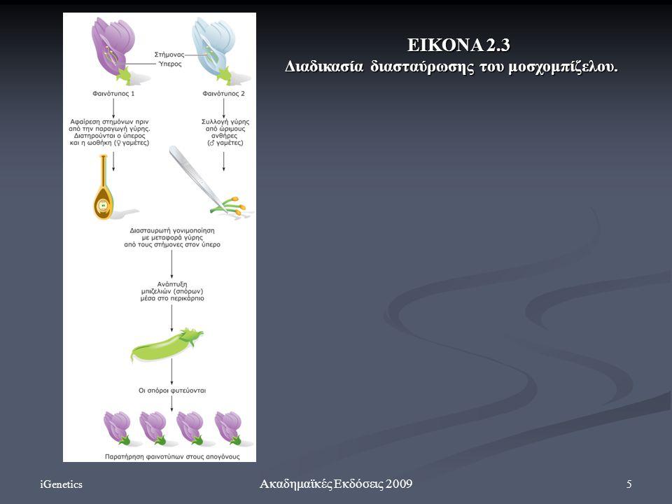 iGenetics 5 Ακαδημαϊκές Εκδόσεις 2009 ΕΙΚΟΝΑ 2.3 Διαδικασία διασταύρωσης του μοσχομπίζελου.