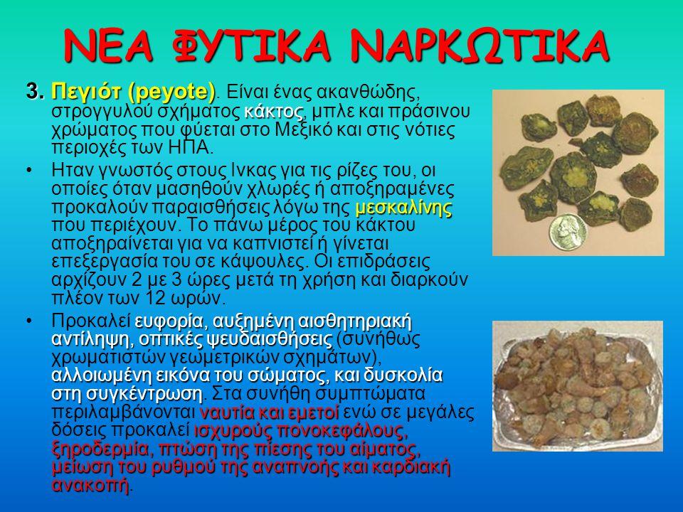 ΝΕΑ ΦΥΤΙΚΑ ΝΑΡΚΩΤΙΚΑ 3. Πεγιότ (peyote). Είναι ένας ακανθώδης, στρογγυλού σχήματος κ κκ κάκτος, μπλε και πράσινου χρώματος που φύεται στο Μεξικό και σ