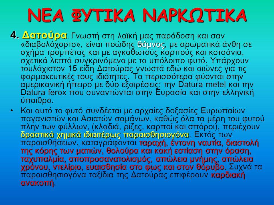 ΝΕΑ ΦΥΤΙΚΑ ΝΑΡΚΩΤΙΚΑ 4. Δατούρα θάμνος 4. Δατούρα. Γνωστή στη λαϊκή μας παράδοση και σαν «διαβολόχορτο», είναι ποώδης θάμνος, με αρωματικά άνθη σε σχή
