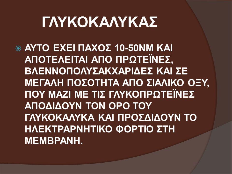 ΓΛΥΚΟΚΑΛΥΚΑΣ  ΑΥΤΟ ΕΧΕΙ ΠΑΧΟΣ 10-50NΜ ΚΑΙ ΑΠΟΤΕΛΕΙΤΑΙ ΑΠΟ ΠΡΩΤΕΪΝΕΣ, ΒΛΕΝΝΟΠΟΛΥΣΑΚΧΑΡΙΔΕΣ ΚΑΙ ΣΕ ΜΕΓΑΛΗ ΠΟΣΟΤΗΤΑ ΑΠΟ ΣΙΑΛΙΚΟ ΟΞΥ, ΠΟΥ ΜΑΖΙ ΜΕ ΤΙΣ ΓΛΥ