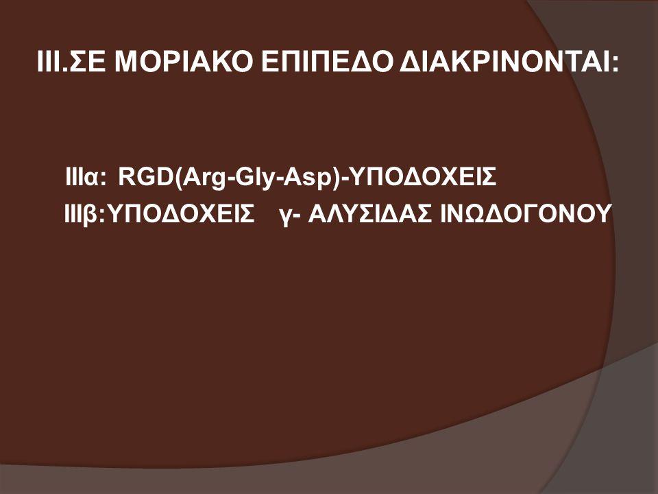 ΙΙΙ.ΣΕ ΜΟΡΙΑΚΟ ΕΠΙΠΕΔΟ ΔΙΑΚΡΙΝΟΝΤΑΙ: ΙΙΙα: RGD(Arg-Gly-Asp)-ΥΠΟΔΟΧΕΙΣ ΙΙΙβ:ΥΠΟΔΟΧΕΙΣ γ- ΑΛΥΣΙΔΑΣ ΙΝΩΔΟΓΟΝΟΥ