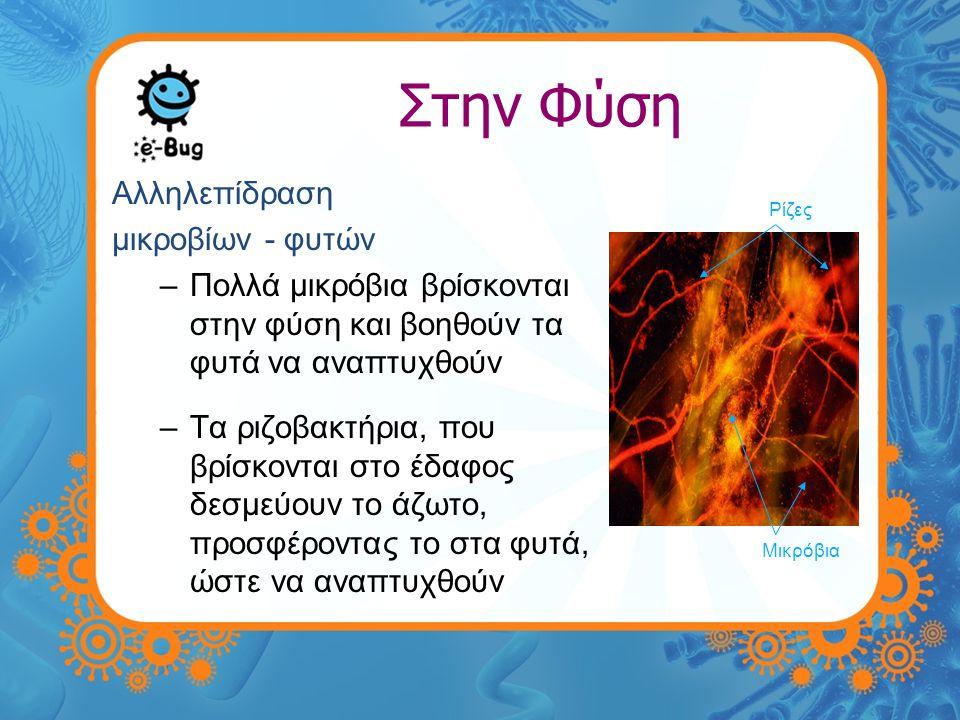Στην Φύση •Παραγωγή οξυγόνου –Τα κυανοβακτήρια ή 'γαλαζοπράσινα φύκη' παράγουν οξυγόνο στους ωκεανούς