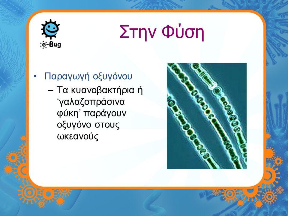 Στην Φύση •Αποσύνθεση –Ορίζεται σαν η αποδόμηση οργανικών ουσιών σε λίπασμα –Οι μύκητες εισχωρούν στις οργανικές ουσίες στο έδαφος αρχικά, ακολουθούμενοι από βακτήρια.