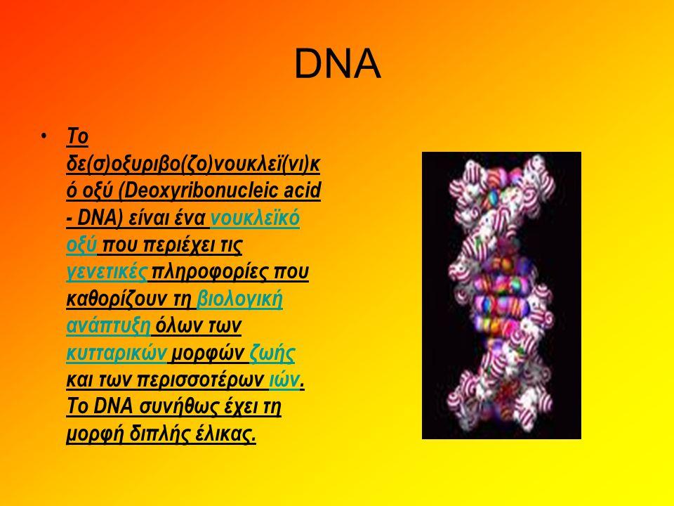 DNA • Το δε(σ)οξυριβο(ζο)νουκλεϊ(νι)κ ό οξύ (Deoxyribonucleic acid - DNA) είναι ένα νουκλεϊκό οξύ που περιέχει τις γενετικές πληροφορίες που καθορίζου