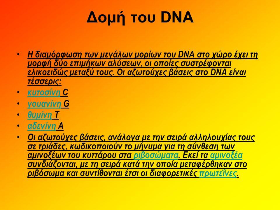 Δομή του DNA • Η διαμόρφωση των μεγάλων μορίων του DNA στο χώρο έχει τη μορφή δύο επιμήκων αλύσεων, οι οποίες συστρέφονται ελικοειδώς μεταξύ τους. Οι