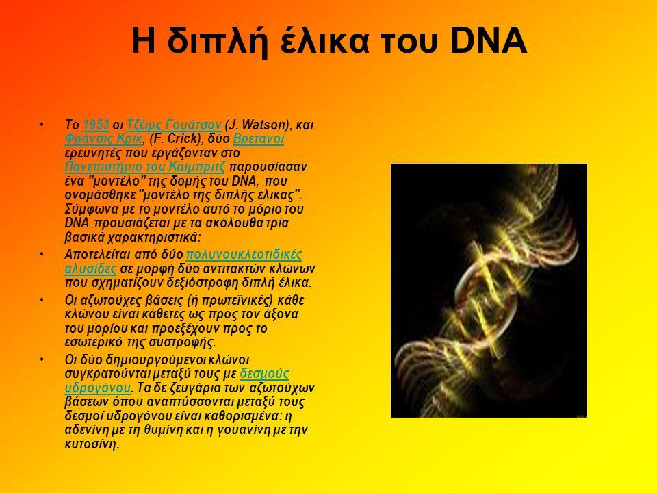 Η διπλή έλικα του DNA • Tο 1953 οι Τζέιμς Γουάτσον (J. Watson), και Φράνσις Κρικ, (F. Crick), δύο Βρετανοί ερευνητές που εργάζονταν στο Πανεπιστήμιο τ