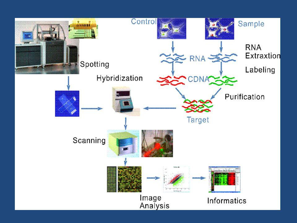 • Microarrays πολύ σημαντική διαγνωστική μέθοδος καθώς μπορούμε να ελέγξουμε την αποτελεσματικότητα των φαρμάκων σε κύτταρα στα οποία έχει εγχυθεί το φάρμακο σε σύγκριση με κύτταρα που δεν έχει.