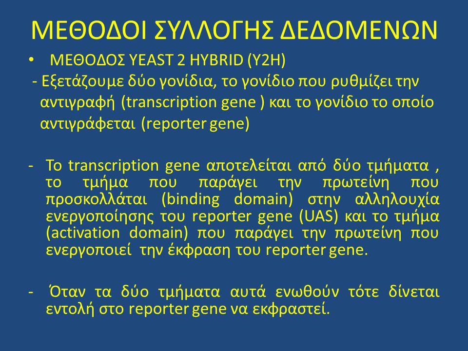 • Η ύπαρξη της πρωτεΐνης που παράγεται από το transcription gene υπονοεί την αλληλεπίδραση μεταξύ των πρωτεϊνών Bait-Prey (δόλωμα – κυνηγό )