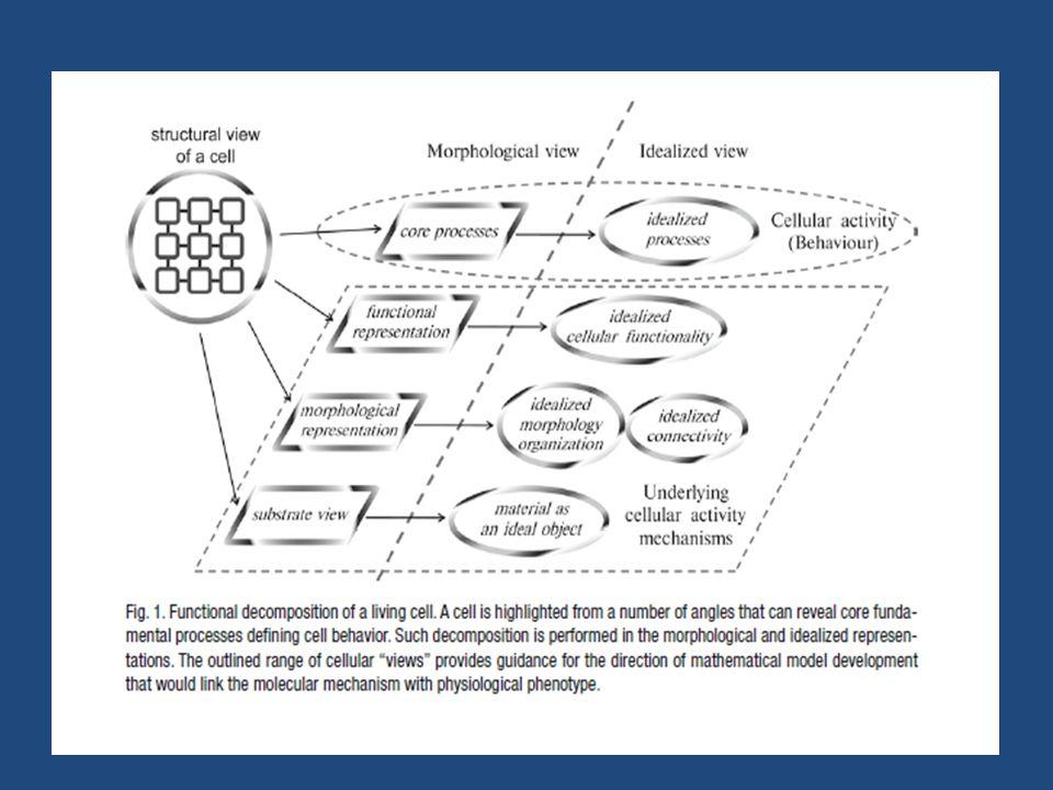 • Η απορρύθμιση των κυτταρικών μηχανισμών συνίσταται σε τρείς τομείς: Α.Υποδοχή σημάτων Β.Διακυτταρικές απαντήσεις Γ.Επικοινωνία μεταξύ διαφορετικών κυτταρικών ομάδων • Η κατανόηση και μοντελοποίηση των ανωμαλιών αυτών μπορεί να οδηγήσει στην ανακάλυψη των κατάλληλων φαρμάκων για την αντιμετώπιση τους.