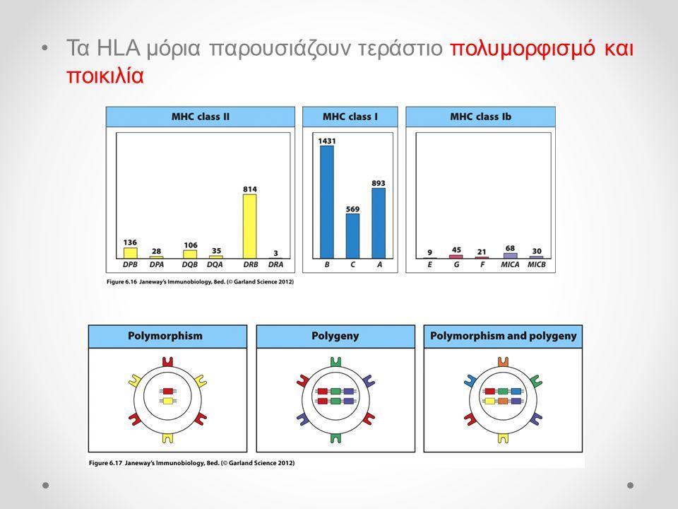 •Τα HLA μόρια παρουσιάζουν τεράστιο πολυμορφισμό και ποικιλία