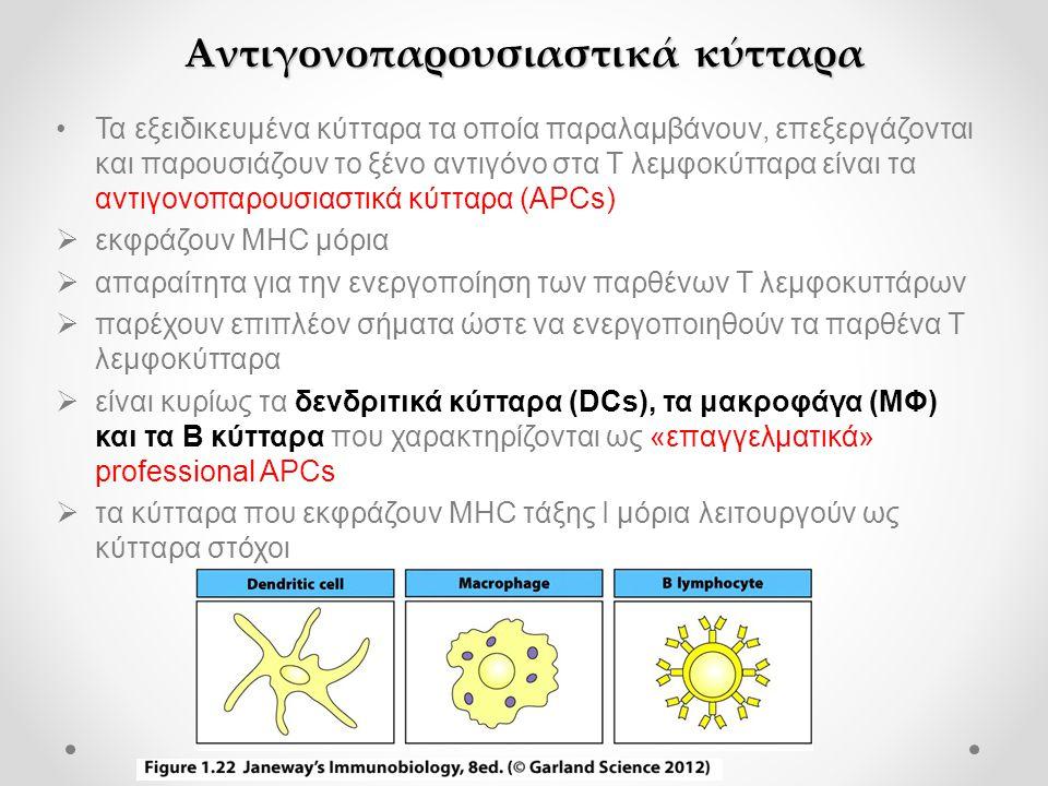 •Τα εξειδικευμένα κύτταρα τα οποία παραλαμβάνουν, επεξεργάζονται και παρουσιάζουν το ξένο αντιγόνο στα Τ λεμφοκύτταρα είναι τα αντιγονοπαρουσιαστικά κύτταρα (APCs)  εκφράζουν MHC μόρια  απαραίτητα για την ενεργοποίηση των παρθένων Τ λεμφοκυττάρων  παρέχουν επιπλέον σήματα ώστε να ενεργοποιηθούν τα παρθένα Τ λεμφοκύτταρα  είναι κυρίως τα δενδριτικά κύτταρα (DCs), τα μακροφάγα (ΜΦ) και τα Β κύτταρα που χαρακτηρίζονται ως «επαγγελματικά» professional APCs  τα κύτταρα που εκφράζουν ΜHC τάξης Ι μόρια λειτουργούν ως κύτταρα στόχοι Αντιγονοπαρουσιαστικά κύτταρα