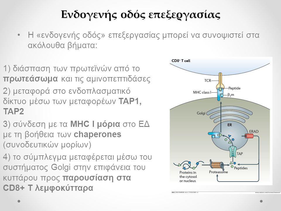 Ενδογενής οδός επεξεργασίας •Η «ενδογενής οδός» επεξεργασίας μπορεί να συνοψιστεί στα ακόλουθα βήματα: 1) διάσπαση των πρωτεϊνών από το πρωτεάσωμα και τις αμινοπεπτιδάσες 2) μεταφορά στο ενδοπλασματικό δίκτυο μέσω των μεταφορέων TAP1, TAP2 3) σύνδεση με τα MHC Ι μόρια στο ΕΔ με τη βοήθεια των chaperones (συνοδευτικών μορίων) 4) το σύμπλεγμα μεταφέρεται μέσω του συστήματος Golgi στην επιφάνεια του κυττάρου προς παρουσίαση στα CD8+ T λεμφοκύτταρα