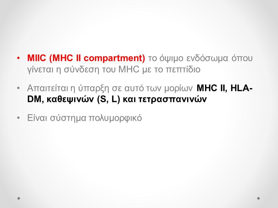 •MIIC (MHC II compartment) το όψιμο ενδόσωμα όπου γίνεται η σύνδεση του MHC με το πεπτίδιο •Απαιτείται η ύπαρξη σε αυτό των μορίων MHC II, HLA- DM, καθεψινών (S, L) και τετρασπανινών •Είναι σύστημα πολυμορφικό