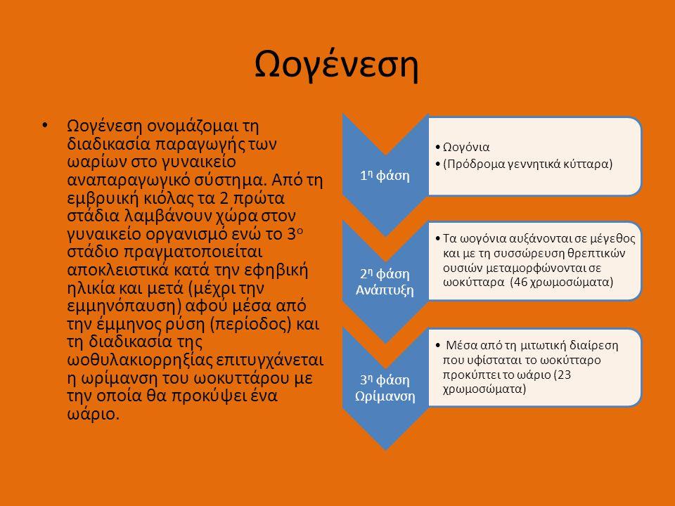 Ωογένεση 1 η φάση •Ωογόνια •(Πρόδρομα γεννητικά κύτταρα) 2 η φάση Ανάπτυξη •Τα ωογόνια αυξάνονται σε μέγεθος και με τη συσσώρευση θρεπτικών ουσιών μεταμορφώνονται σε ωοκύτταρα (46 χρωμοσώματα) 3 η φάση Ωρίμανση • Μέσα από τη μιτωτική διαίρεση που υφίσταται το ωοκύτταρο προκύπτει το ωάριο (23 χρωμοσώματα) • Ωογένεση ονομάζομαι τη διαδικασία παραγωγής των ωαρίων στο γυναικείο αναπαραγωγικό σύστημα.