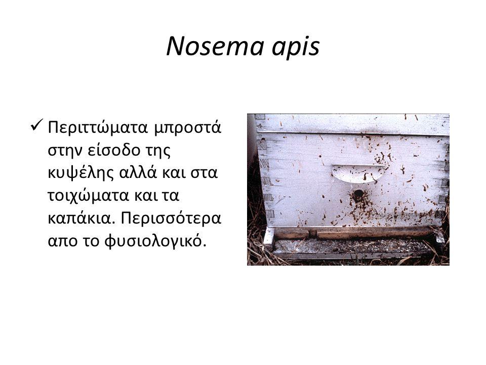 Nosema apis  Περιττώματα μπροστά στην είσοδο της κυψέλης αλλά και στα τοιχώματα και τα καπάκια. Περισσότερα απο το φυσιολογικό.