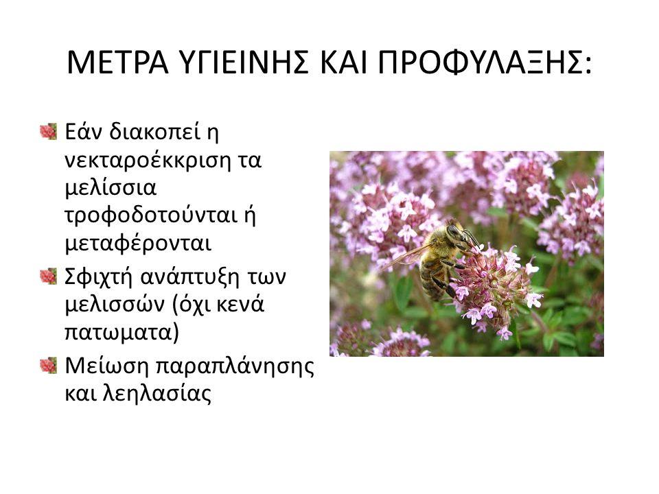 ΜΕΤΡΑ ΥΓΙΕΙΝΗΣ ΚΑΙ ΠΡΟΦΥΛΑΞΗΣ: Εάν διακοπεί η νεκταροέκκριση τα μελίσσια τροφοδοτούνται ή μεταφέρονται Σφιχτή ανάπτυξη των μελισσών (όχι κενά πατωματα