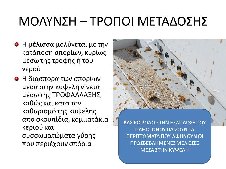 ΜΟΛΥΝΣΗ – ΤΡΟΠΟΙ ΜΕΤΑΔΟΣΗΣ Η μέλισσα μολύνεται με την κατάποση σπορίων, κυρίως μέσω της τροφής ή του νερού Η διασπορά των σπορίων μέσα στην κυψέλη γίν