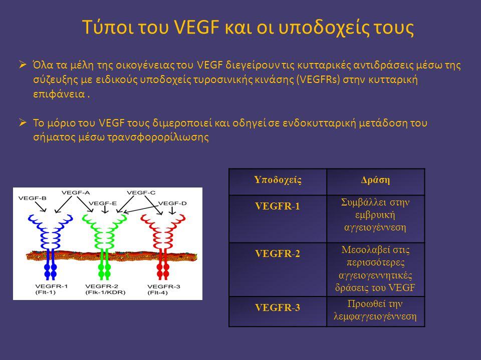 Τύποι του VEGF και οι υποδοχείς τους ΥποδοχείςΔράση VEGFR-1 Συμβάλλει στην εμβρυική αγγειογέννεση VEGFR-2 Μεσολαβεί στις περισσότερες αγγειογεννητικές