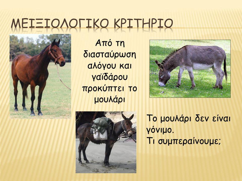 Από τη διασταύρωση αλόγου και γαϊδάρου προκύπτει το μουλάρι Το μουλάρι δεν είναι γόνιμο. Τι συμπεραίνουμε;