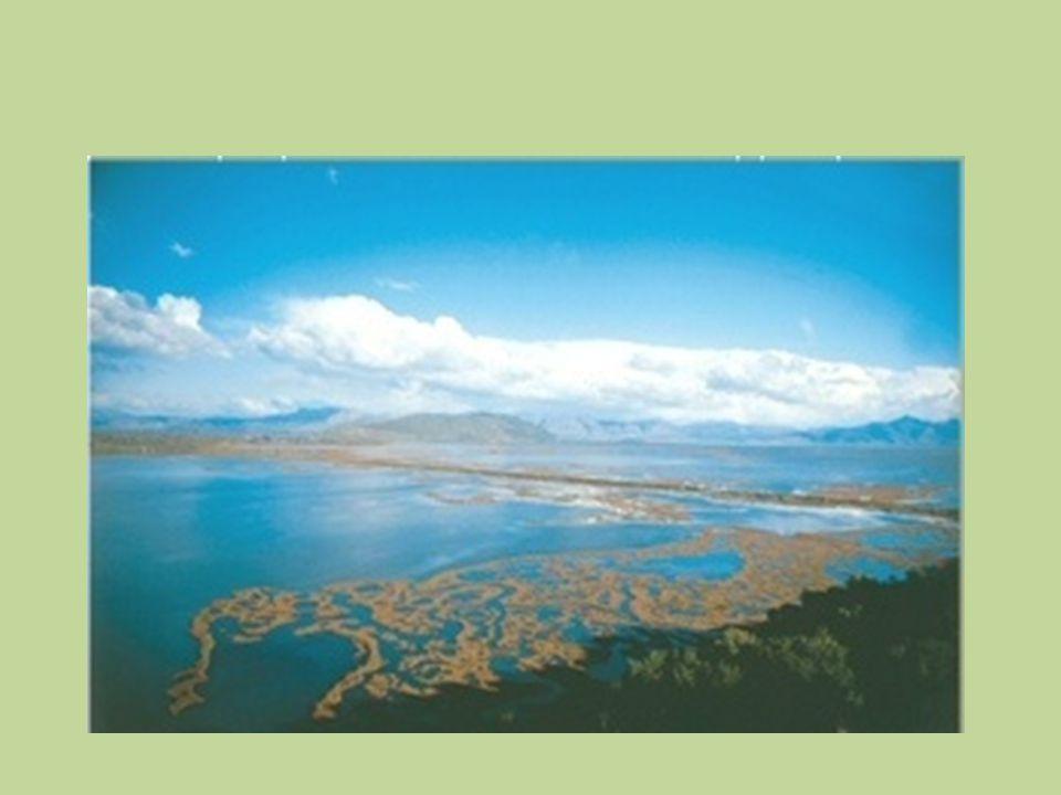 • Ο Αμβρακικός Κόλπος μια κλειστή θάλασσα, η οποία περιλαμβάνει πολλούς μικρότερους υγρότοπους.