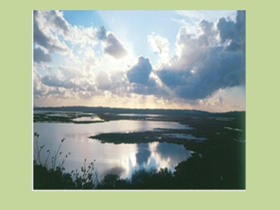 ΤΙ ΕΙΝΑΙ ΟΙ ΥΓΡΟΒΙΟΤΟΠΟΙ; κάθε περιοχή που καλύπτεται εποχικά ή μόνιμα από ρηχά νερά, ή που δεν καλύπτεται ποτέ από νερά, αλλά το υπόστρωμά της είναι υγρό για μεγάλο χρονικό διάστημα μέσα στο έτος.