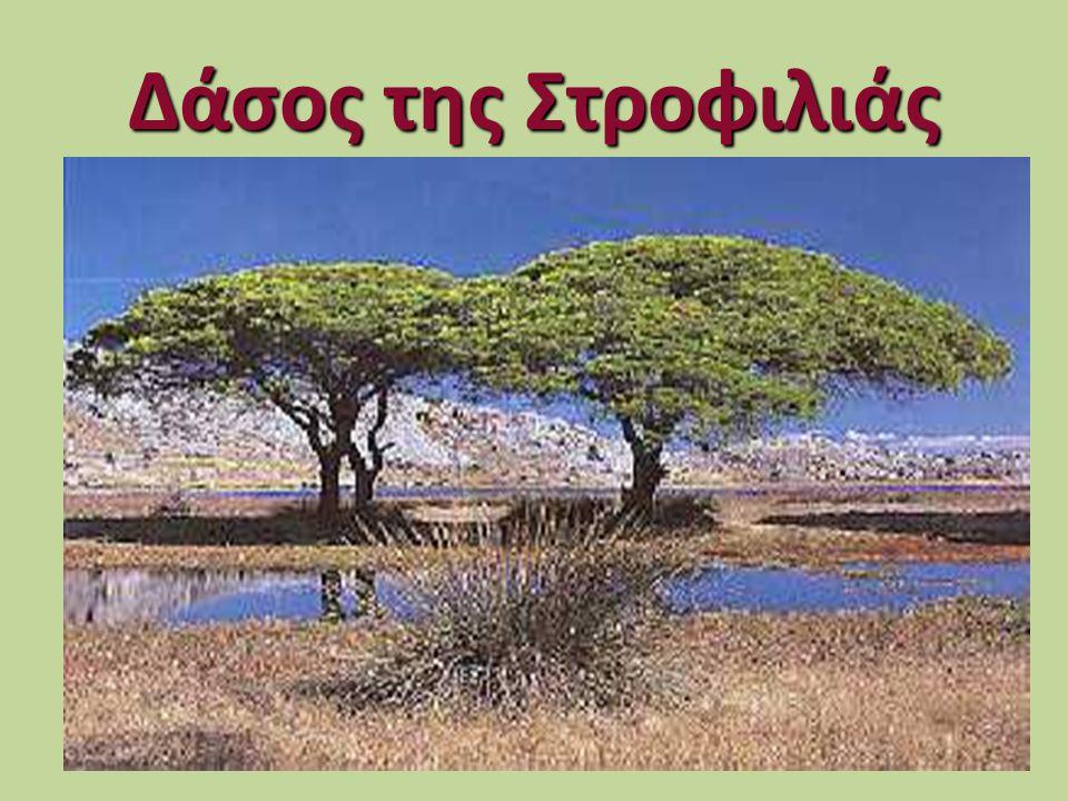 Υδροβιότοποι της Ελλάδας • 1. Η Λιμνοθάλασσα Κοτύχι και Δάσος Στροφυλιάς 1. Η Λιμνοθάλασσα Κοτύχι και Δάσος Στροφυλιάς • 2. Η Λιμνοθάλασσα Μεσολογγίου