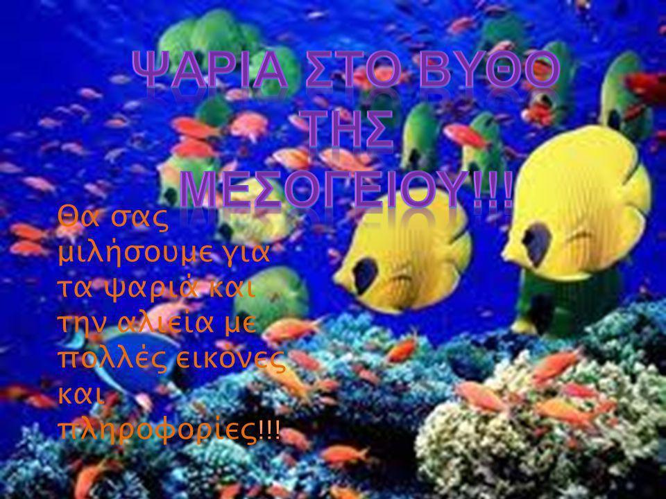 Η Μεσόγειος θάλασσα έχει πολλές ποικιλίες ψαριών.