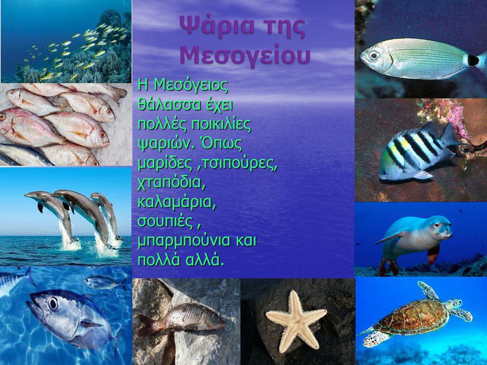Η Μεσόγειος θάλασσα έχει πολλές ποικιλίες ψαριών. Όπως μαρίδες,τσιπούρες, χταπόδια,καλαμάρια, σουπιές, μπαρμπούνια και πολλά αλλά.