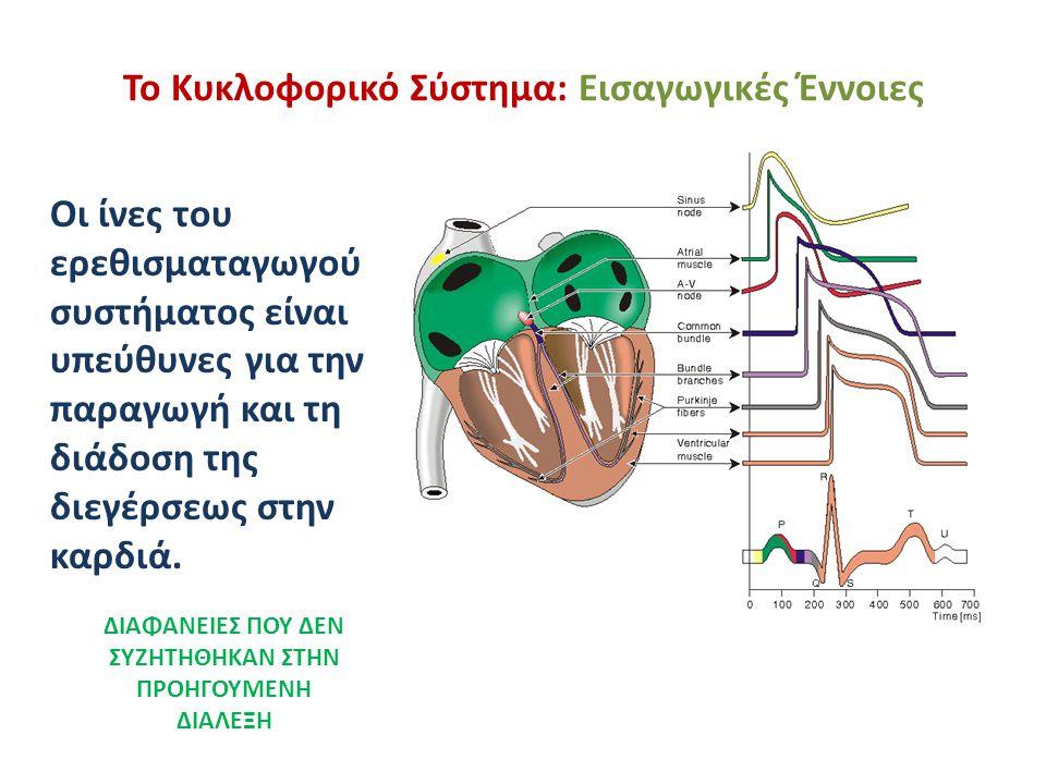 Το Κυκλοφορικό Σύστημα: Εισαγωγικές Έννοιες Οι ίνες του ερεθισματαγωγού συστήματος είναι υπεύθυνες για την παραγωγή και τη διάδοση της διεγέρσεως στην