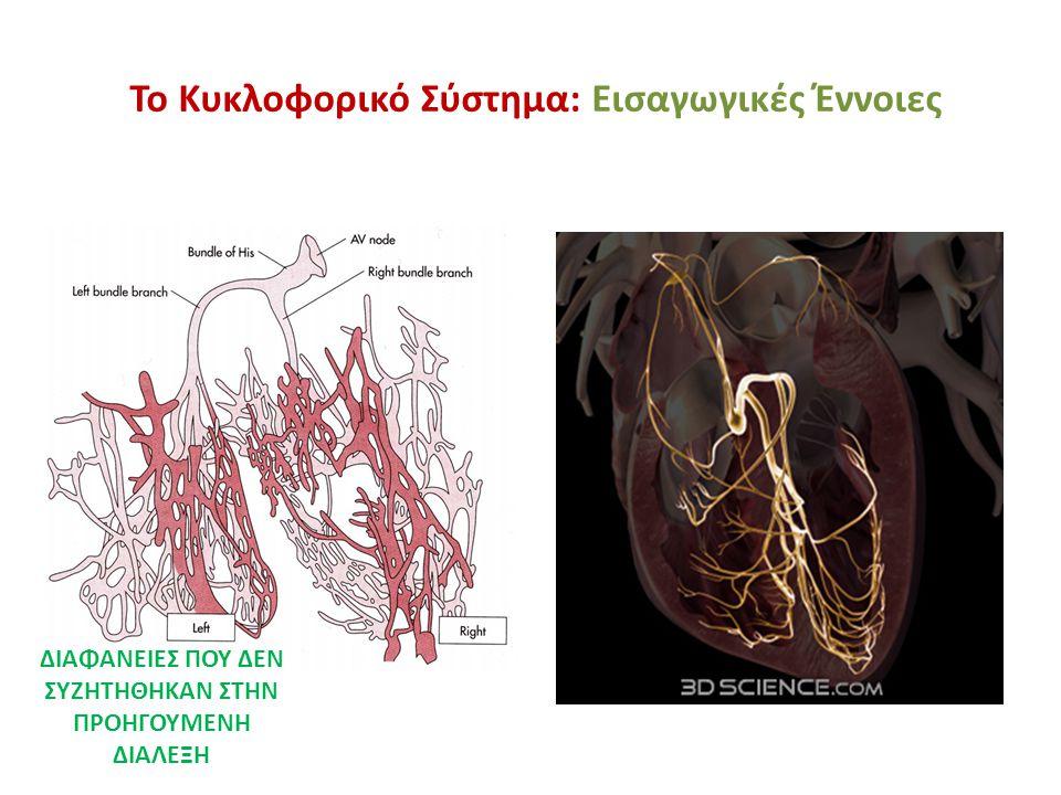 Το Κυκλοφορικό Σύστημα: Εισαγωγικές Έννοιες Η νοραδρεναλίνη αυξάνει την είσοδο των Ca 2+ στα κύτταρα κινητοποιώντας συγχρόνως τα ενδοκυττάρια αποθέματα τους και έτσι εξηγούνται η ταχύτερη άνοδος των προδυναμικών, η αύξηση της εντάσεως συστολής και η αύξηση του ύψους των δυναμικών.
