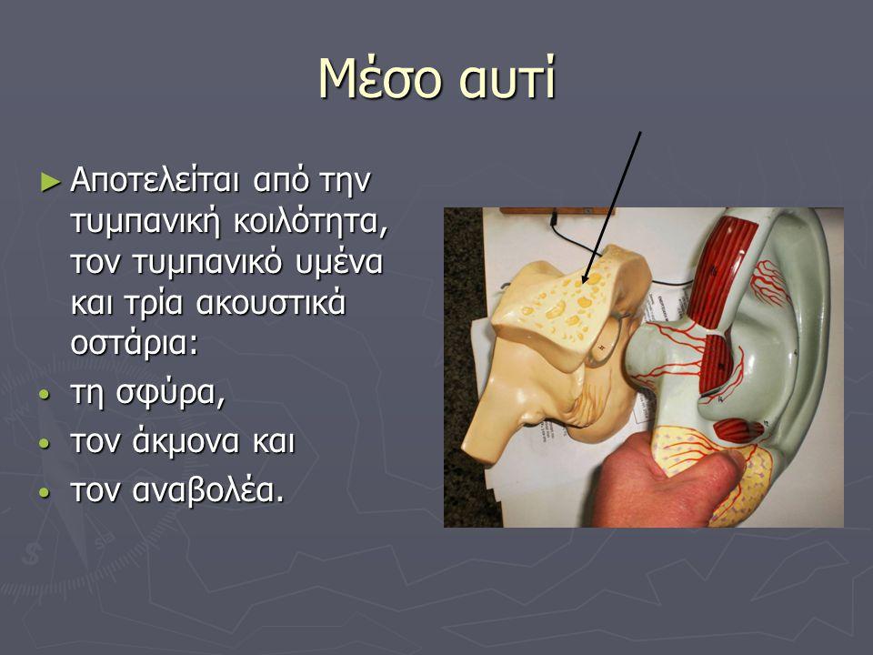 Μέσο αυτί ► Αποτελείται από την τυμπανική κοιλότητα, τον τυμπανικό υμένα και τρία ακουστικά οστάρια: • τη σφύρα, • τον άκμονα και • τον αναβολέα.