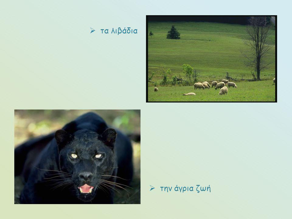  τα λιβάδια  την άγρια ζωή