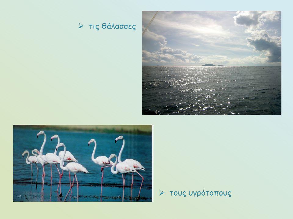  τους υγρότοπους  τις θάλασσες