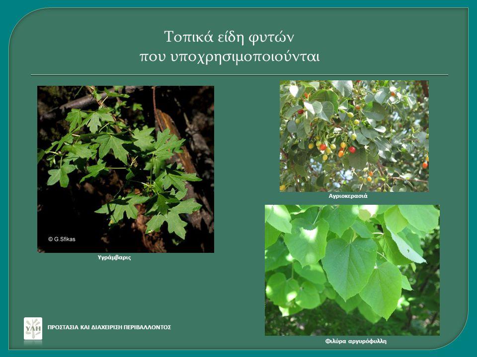 ΠΡΟΣΤΑΣΙΑ ΚΑΙ ΔΙΑΧΕΙΡΙΣΗ ΠΕΡΙΒΑΛΛΟΝΤΟΣ Τοπικά είδη φυτών που υποχρησιμοποιούνται Υγράμβαρις Φιλύρα αργυρόφυλλη Αγριοκερασιά