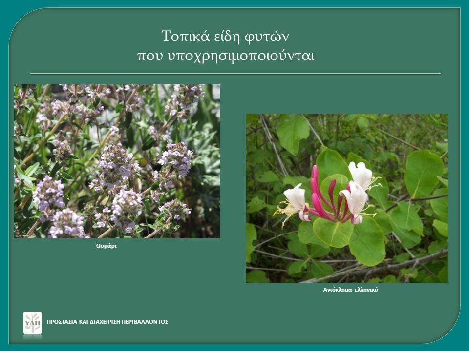 ΠΡΟΣΤΑΣΙΑ ΚΑΙ ΔΙΑΧΕΙΡΙΣΗ ΠΕΡΙΒΑΛΛΟΝΤΟΣ Τοπικά είδη φυτών που υποχρησιμοποιούνται Θυμάρι Αγιόκλημα ελληνικό