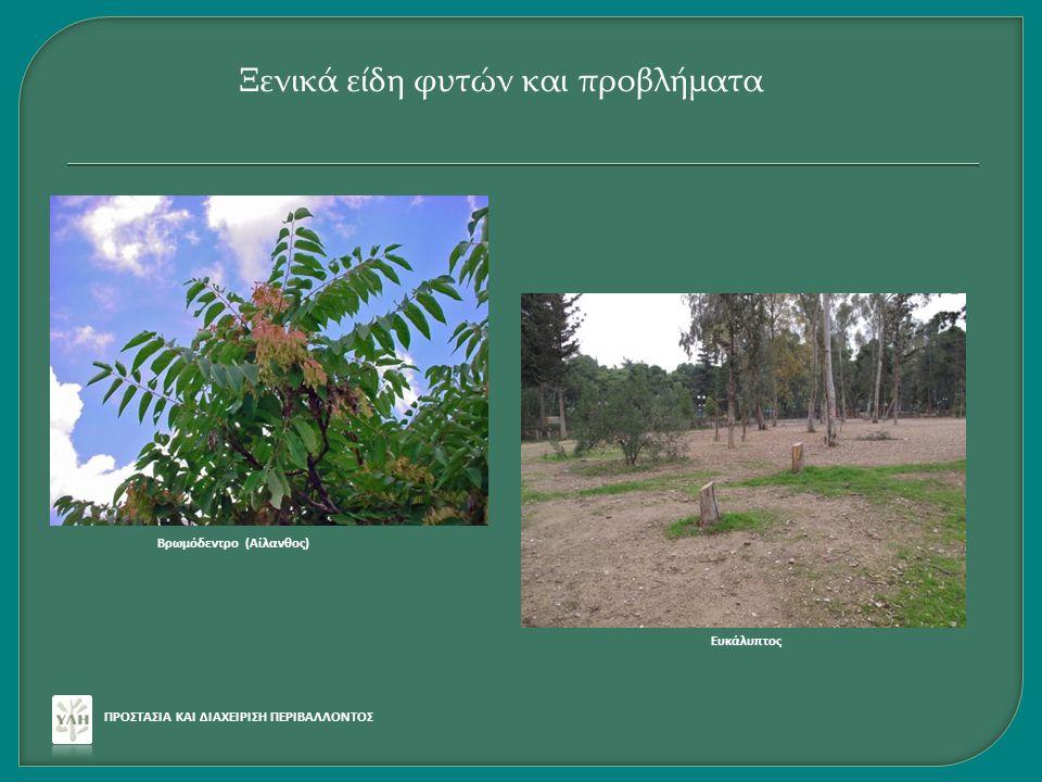 ΠΡΟΣΤΑΣΙΑ ΚΑΙ ΔΙΑΧΕΙΡΙΣΗ ΠΕΡΙΒΑΛΛΟΝΤΟΣ Ξενικά είδη φυτών και προβλήματα Βρωμόδεντρο (Αίλανθος) Ευκάλυπτος