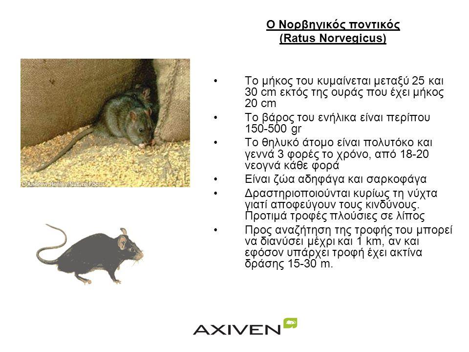 ΤΡΩΚΤΙΚΑ Mus Musculus (Οικιακός ποντικός) •Έχει μήκος σώματος έως 9cm και ίδιου μήκους ουρά ημίγυμνη και λεία •Το βάρος του κυμαίνεται μεταξύ 15 και 2