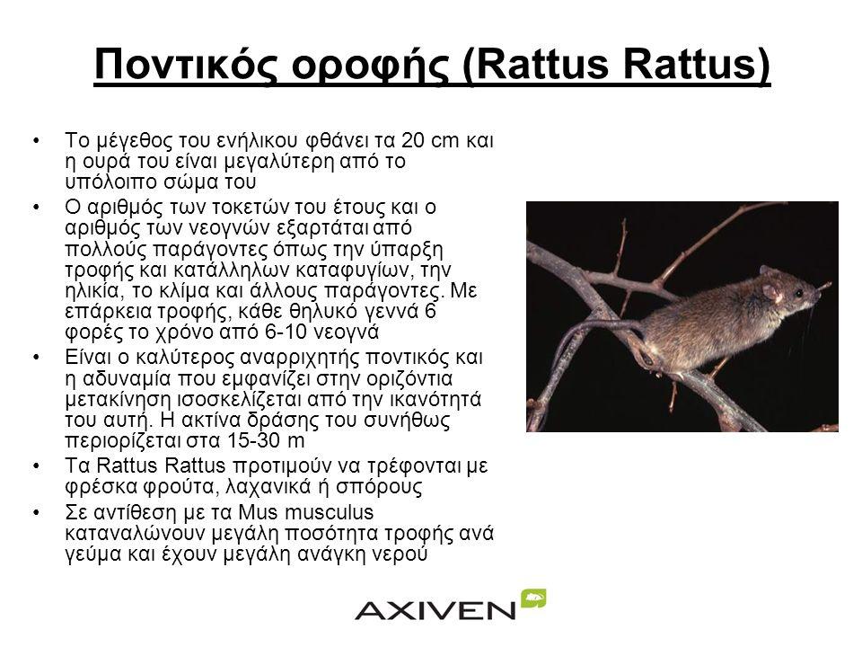 Ο Νορβηγικός ποντικός (Ratus Norvegicus) •Το μήκος του κυμαίνεται μεταξύ 25 και 30 cm εκτός της ουράς που έχει μήκος 20 cm •Το βάρος του ενήλικα είναι