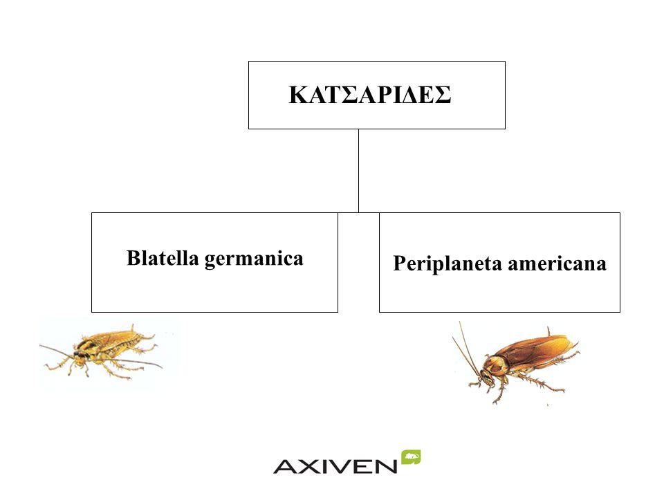 ΚΑΤΣΑΡΙΔΕΣ Blatella germanica Periplaneta americana