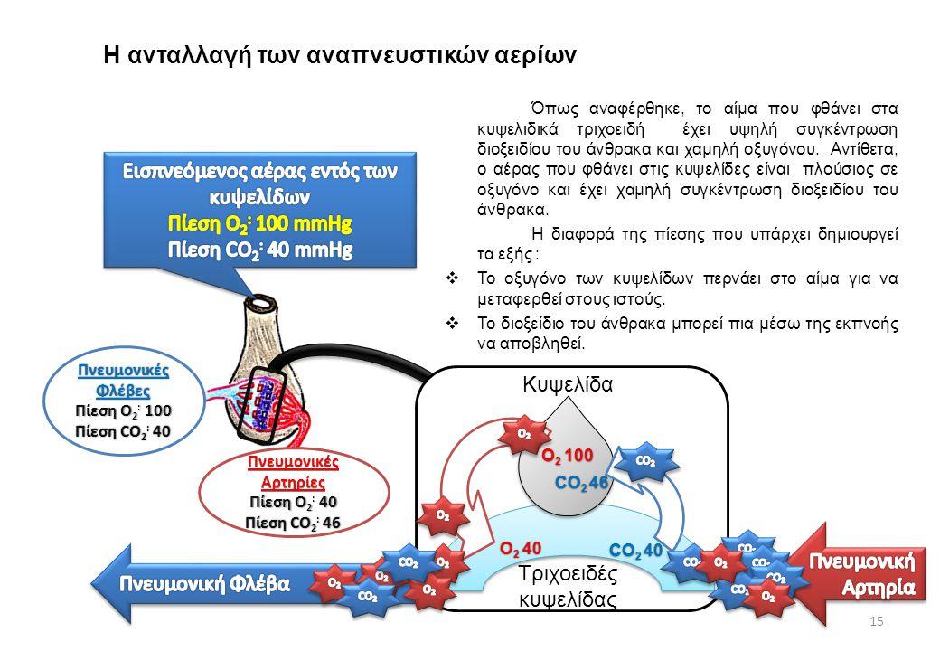 Αρτηρία Η ανταλλαγή των αναπνευστικών αερίων 15 Όπως αναφέρθηκε, το αίμα που φθάνει στα κυψελιδικά τριχοειδή έχει υψηλή συγκέντρωση διοξειδίου του άνθ