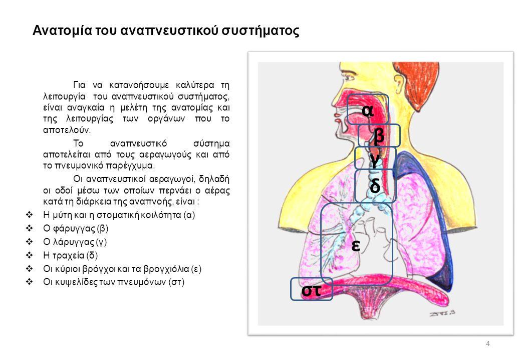 Ανατομία του αναπνευστικού συστήματος Για να κατανοήσουμε καλύτερα τη λειτουργία του αναπνευστικού συστήματος, είναι αναγκαία η μελέτη της ανατομίας κ