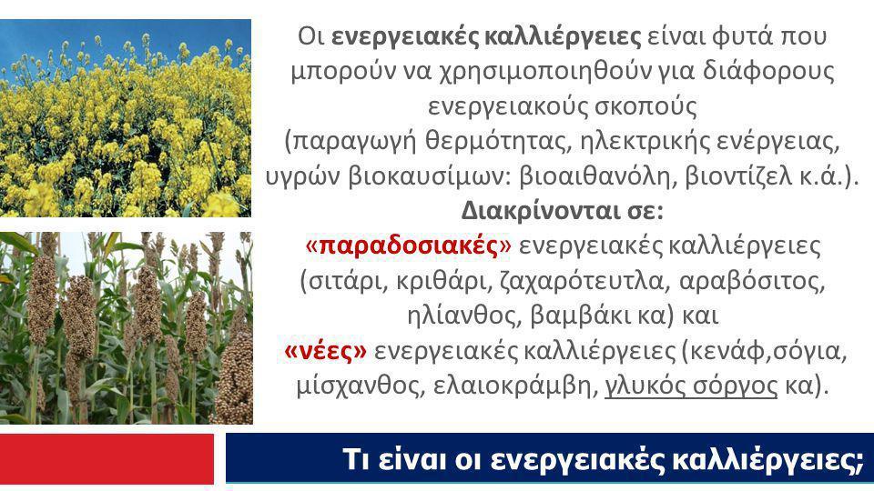 Τι είναι οι ενεργειακές καλλιέργειες; Οι ενεργειακές καλλιέργειες είναι φυτά που μπορούν να χρησιμοποιηθούν για διάφορους ενεργειακούς σκοπούς (παραγω