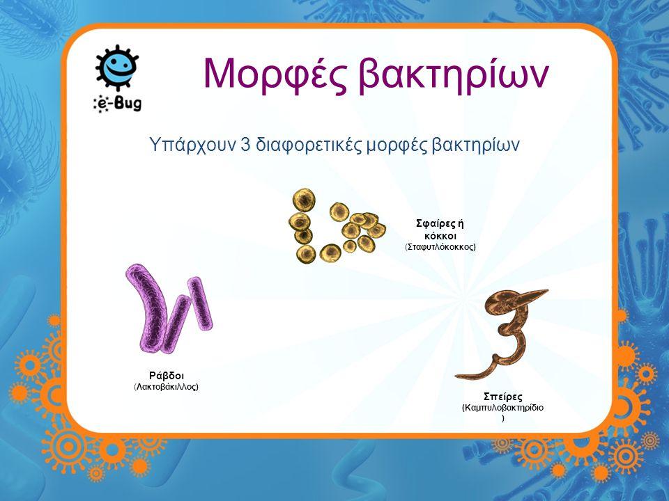 Μορφές βακτηρίων Υπάρχουν 3 διαφορετικές μορφές βακτηρίων Σπείρες (Καμπυλοβακτηρίδιο ) Ράβδοι (Λακτοβάκιλλος) Σφαίρες ή κόκκοι (Σταφυτλόκοκκος)