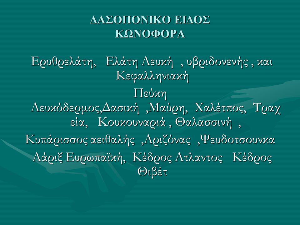 ΔΑΣΟΠΟΝΙΚΟ ΕΙΔΟΣ ΚΩΝΟΦΟΡΑ Ερυθρελάτη, Ελάτη Λευκή, υβριδονενής, και Κεφαλληνιακή Ερυθρελάτη, Ελάτη Λευκή, υβριδονενής, και Κεφαλληνιακή Πεύκη Λευκόδερμος,Δασική,Μαύρη, Χαλέτπος, Τραχ εία, Κουκουναριά, Θαλασσινή, Κυπάρισσος αειθαλής,Αριζόνας,Ψευδοτσουνκα Κυπάρισσος αειθαλής,Αριζόνας,Ψευδοτσουνκα Λάριξ Ευρωπαϊκή, Κέδρος Ατλαντος Κέδρος Θιβέτ Λάριξ Ευρωπαϊκή, Κέδρος Ατλαντος Κέδρος Θιβέτ