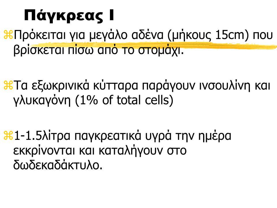 Πάγκρεας Ι zΠρόκειται για μεγάλο αδένα (μήκους 15cm) που βρίσκεται πίσω από το στομάχι.