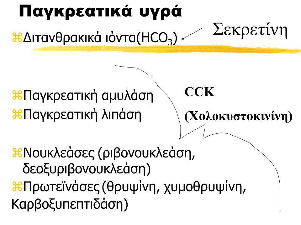 Παγκρεατικά υγρά zΔιτανθρακικά ιόντα(HCO 3 ) zΠαγκρεατική αμυλάση zΠαγκρεατική λιπάση zΝουκλεάσες (ριβονουκλεάση, δεοξυριβονουκλεάση) zΠρωτεϊνάσες(θρυψίνη, χυμοθρυψίνη, Καρβοξυπεπτιδάση) CCK (Χολοκυστοκινίνη) Σεκρετίνη