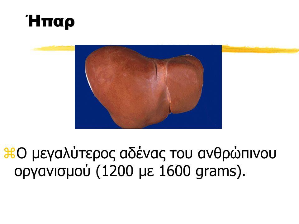 Ήπαρ zΟ μεγαλύτερος αδένας του ανθρώπινου οργανισμού (1200 με 1600 grams).