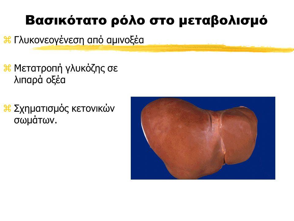 Βασικότατο ρόλο στο μεταβολισμό zΓλυκονεογένεση από αμινοξέα zΜετατροπή γλυκόζης σε λιπαρά οξέα zΣχηματισμός κετονικών σωμάτων.