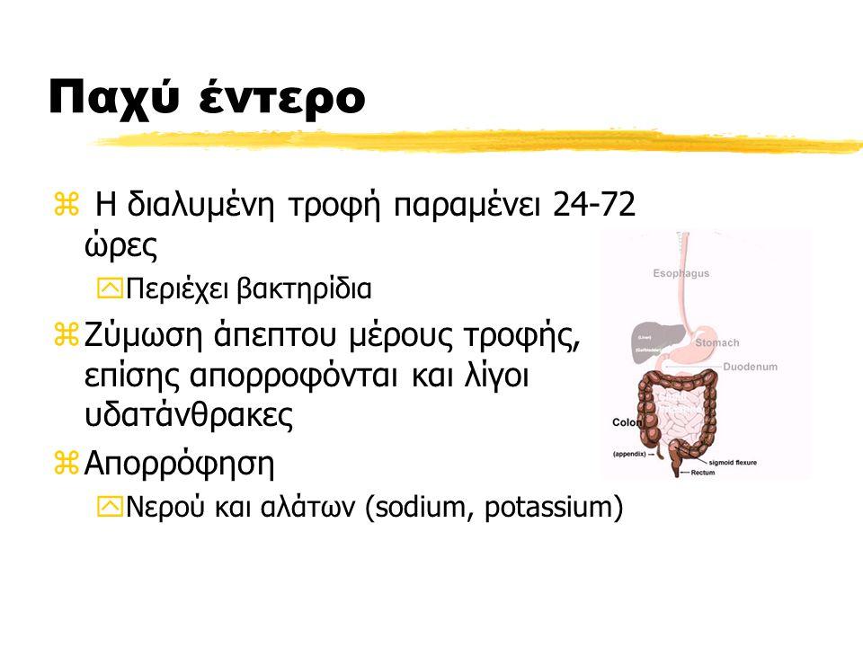 Παχύ έντερο z Η διαλυμένη τροφή παραμένει 24-72 ώρες yΠεριέχει βακτηρίδια zΖύμωση άπεπτου μέρους τροφής, επίσης απορροφόνται και λίγοι υδατάνθρακες zΑπορρόφηση yΝερού και αλάτων (sodium, potassium)